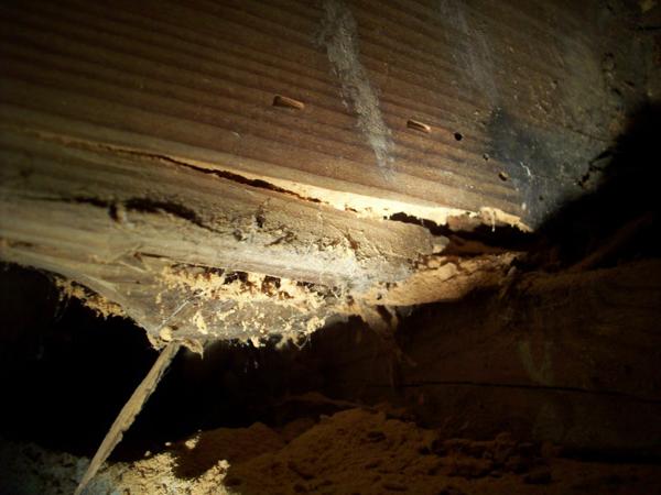 Mendo Lake Termite Services Offered
